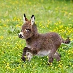 eşek yavrusu kırlarda koşuyor